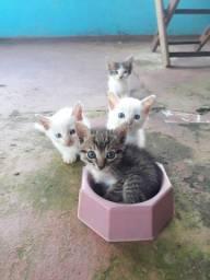 Pet gato