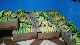 Mudas de bananas selecionadas
