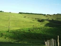 Fezenda:porto calvo 36 hectares