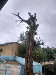 Poda, corte de árvores (Jardinagem)