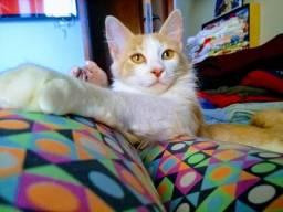 Adoção de gato macho