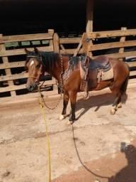 Vendo cavalo macha batida apenas 4 ano c