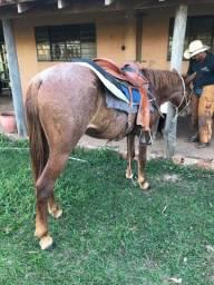Cavalo MM/QM