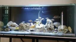 Rocha marinha para aquários