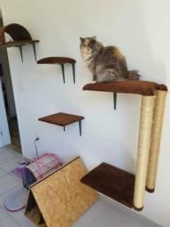 Prateleira para gatos