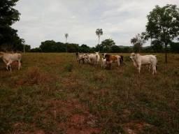 Sítio 13 alqueires município de Pirenópolis