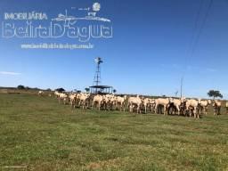 Fazenda 48 Alqueires Estrutura de Primeira Plana Rica em Agua