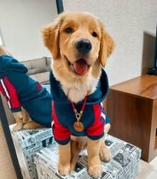 Roupa Adidog para cachorro - Tamanho 7
