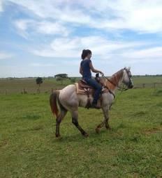 Cavalo p.o