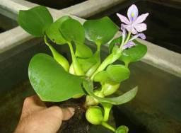 Planta Guapé
