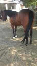 Título do anúncio: Cavalo De Vaquejada De Direita