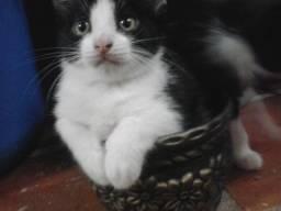 Lindo gatinho doação