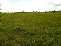 Pastagem região de Castanhal