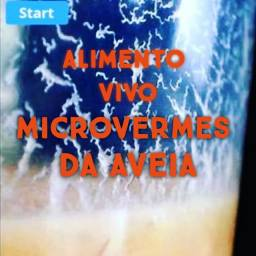 microvermes