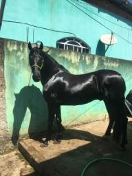 Título do anúncio: Cavalo top