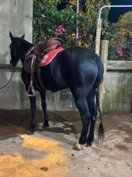 Título do anúncio: Égua preta macha picada