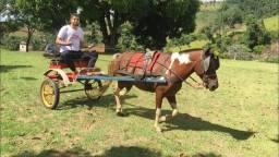Vende-se cavalo e charrete