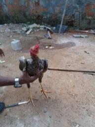 Vendo ou troco esse frango