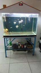 Vendo aquário de 160 litros completo