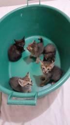 Doação consciente  de gatinhos