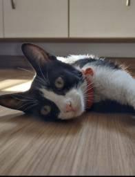 Título do anúncio: Gatinha para adoção