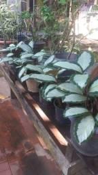 Temos váriedades de plantas com vários preços