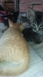 Gatos gatinha