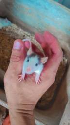 Título do anúncio: Rato (Twister/Mercol)