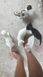 Doação de filhotinhos de gato