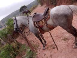 Título do anúncio: Cavalo macha picada