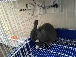 Mini Coelho com gaiola