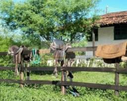 (OL) Vendo Propriedade em Abreu e Lima - Por trás da aço norte