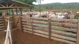 Fazenda em Alto Garças - Pecuária