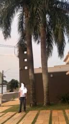 DOA SE 2 PALMEIRAS IMPERIAIS de 10 metros