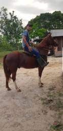 Vende-se Cavalo QM