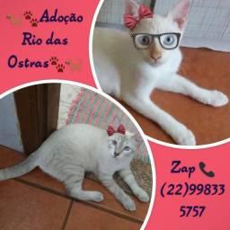 Gatinhos para adoção em Rio das Ostras