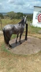 Título do anúncio: Cavalo mm com documento provisório