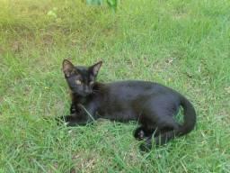 lindo gato macho com 5 meses para doacao itanhaem sp