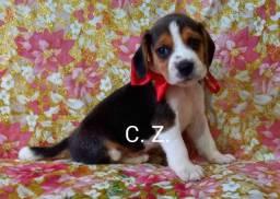 Título do anúncio: Beagle filhotes disponíveis para entrega, cães com pedigree