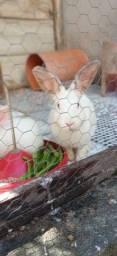 Vendo Filhote de coelho