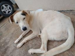 Título do anúncio: Cachorro macho Paranavaí