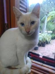 Título do anúncio: Doação de uma gatinha