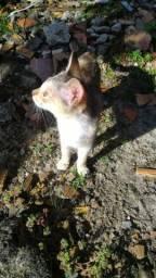 Doação de 3 Gatos 3 meses