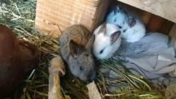 Vendo coelhos, coelhinhos