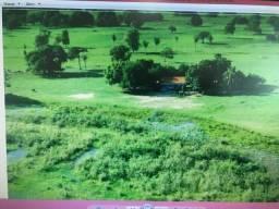 Fazenda na região do paiuaguas,corumba ms.8.000has