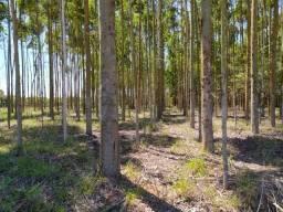 Velleda Of. 4.500 árvores eucalipto ponto de corte, Barbada