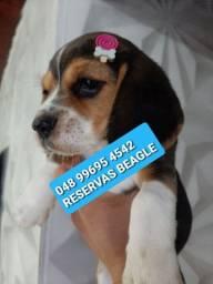 Reservas de Beagles abertas!