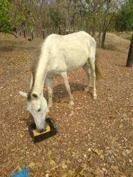 Cavalo Capão