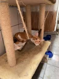 Título do anúncio: Doação responsável - Gato macho castrado