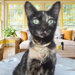 Doação linda gatinha fêmeazinha castradinha 8 meses